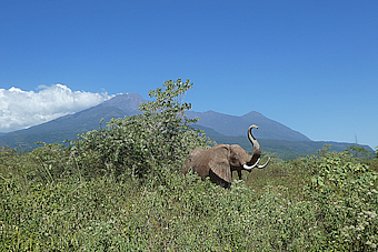 Arusha NP view to Mount Meru, elephant sculpture