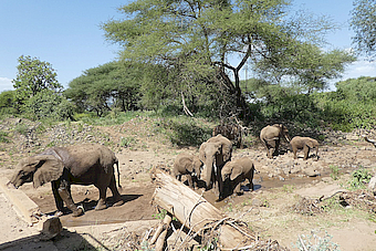 LakeManyara Elephants