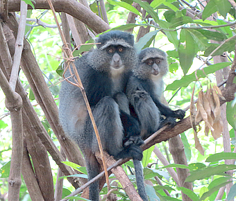 LakeManyara Monkeys