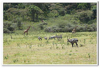 Little Serengeti